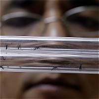 Con plan de choque se busca frenar mosquito del zika en el Atlántico