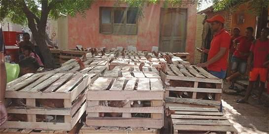 Arrancó entrega de 25.000 gallinas ponedoras en el Atlántico