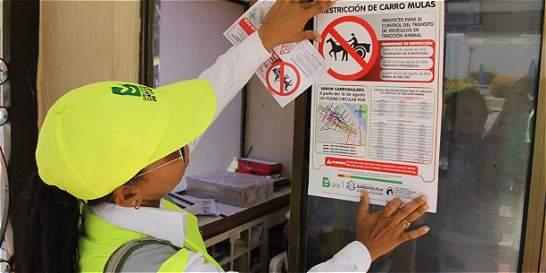 Aumentan restricciones a vehículos de tracción animal en Barranquilla