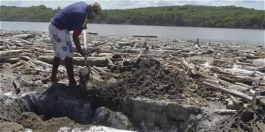 Hallan delfín muerto en playas de corregimiento de Salgar, Atlántico