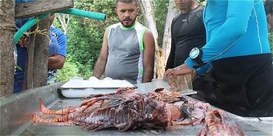 El plato fuerte en playas del Tayrona es el pez León
