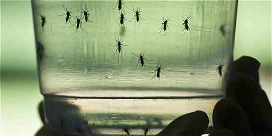 Dengue, zika o chikungunya, aprenda a diferenciarlos