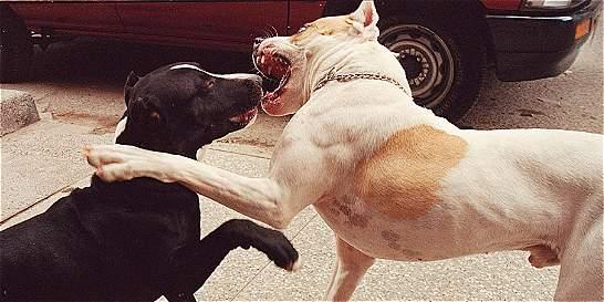 Un pitbull aterroriza a la Playita en Sogamoso
