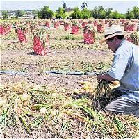Agricultores viajan a Perú