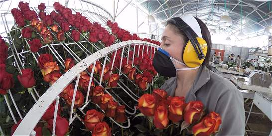 De Boyacá también exportan flores