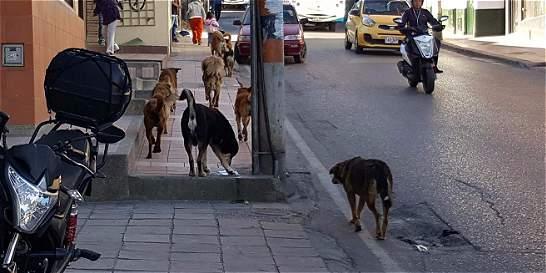 Aumenta el número de perros callejeros en Tunja