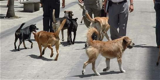 Aumentaron los casos de ataques de mascotas