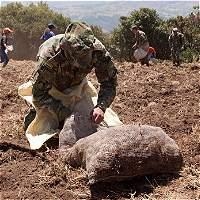 Ejército, con fe en la papa para La Guajira