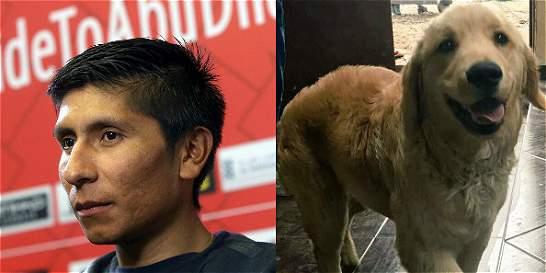 Apareció 'Pony', la mascota de la hija del ciclista Nairo Quintana