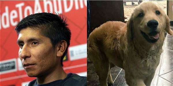 Nairo Quintana y Pony, la mascota de su hija.