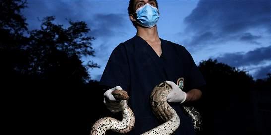 Regreso de 148 animales a la libertad en la selva amazónica