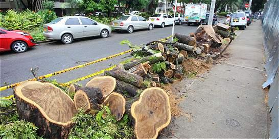 Crítica situación atraviesan los pocos árboles de las calles de Cali