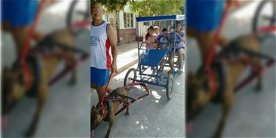 Foto de perro pitbull halando bicicarro con niños desata polémica
