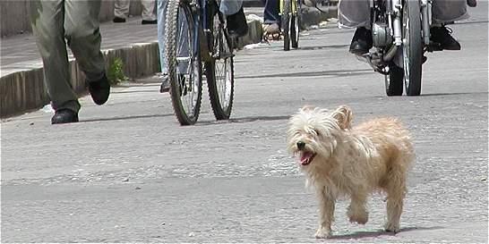 Indignación en el norte del Valle del Cauca por muerte de una perra