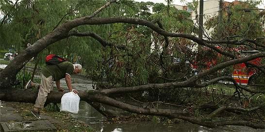 Desplome de árboles en sur y suroriente de Cali tras fuerte aguacero