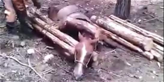 En video: denuncian presunto caso de maltrato animal en el Valle