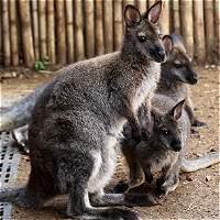 Las nuevas crías que alegran el Zoológico