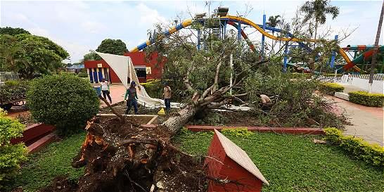 Tormentas del domingo en Cali dejaron 21 árboles caídos