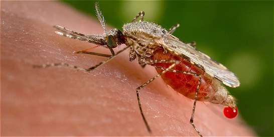 Aumento de casos de malaria en Colombia, prende alertas