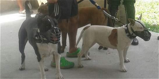 Fallece hombre en Cali por ataque de su perro