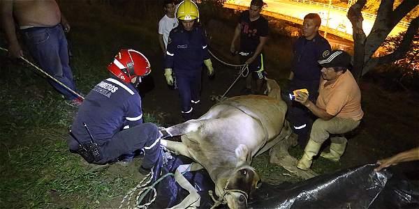 Paca la vaca