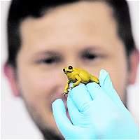 Investigadores crean web para conocer anfibios del departamento