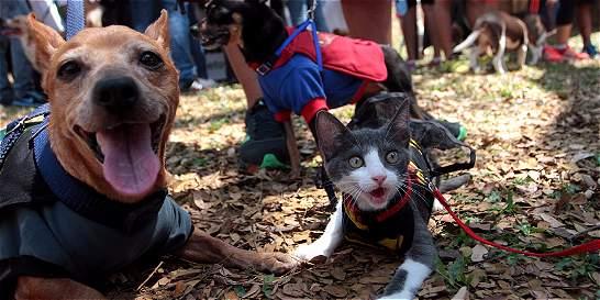 En Cali recomiendan cuidar a las mascotas en las fiestas de fin de año