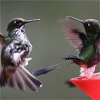 Finca Alejandría, el paraíso donde reinan colibríes en Cali
