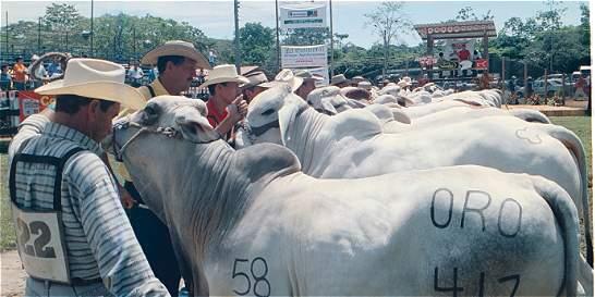 El tamaño de los testículos de los toros sí importa