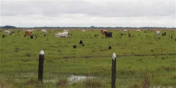 El proyecto reavivó debate por la propiedad de la tierra en la Altillanura.