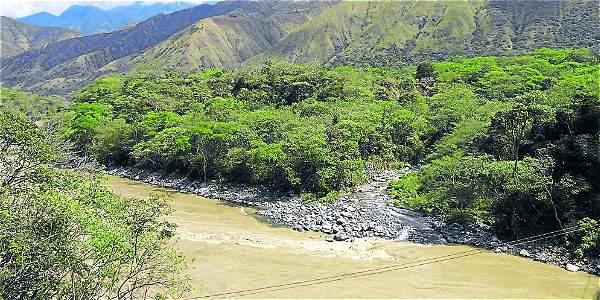 Cuidan y reforestan bosque seco tropical en Antioquia