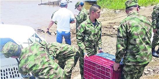 Siguen traficando con la vida silvestre en Antioquia
