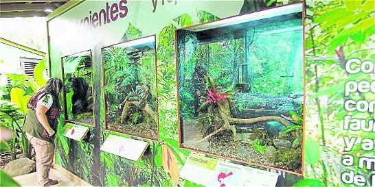 Los Pequeños 'invasores' del Zoológico Santa Fe