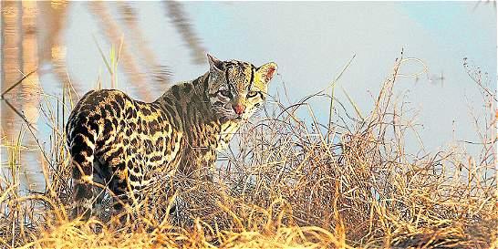 Especies de fauna silvestre están en riesgo en el valle de Aburrá