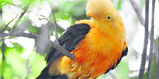 Fauna silvestre sobrevive en Medellín y la hace más habitable