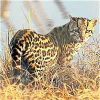 Cada vez invaden más territorios de fauna silvestre en Antioquia