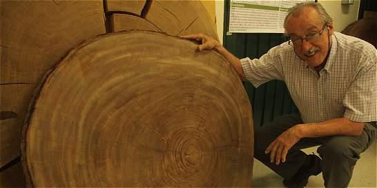 Los árboles del trópico revelan la historia del clima