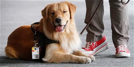 Miguel, el perro de asistencia que 'trabajará' en un banco
