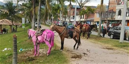 Alcaldía de Guatapé responde por caso de maltrato de caballos