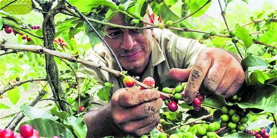 Piden condonar las deudas a cafeteros de Antioquia
