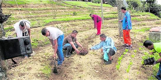 En granjas buscan rehabilitar a los habitantes de calle
