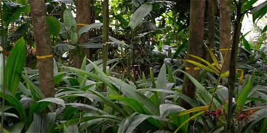 Jardín Botánico de Medellín educa para el cambio climático