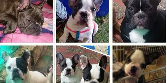 Ofrecen recompensa por 13 perros robados en Envigado