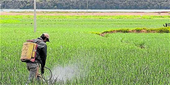 Alertan por mal uso de plaguicidas en el campo y en la ciudad