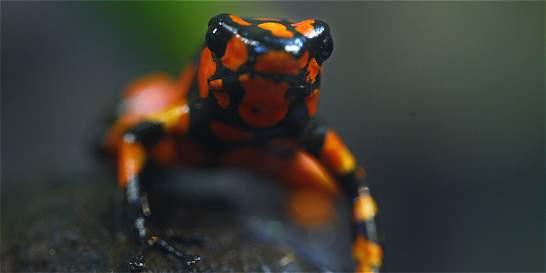 Actualizan datos de anfibios en el país