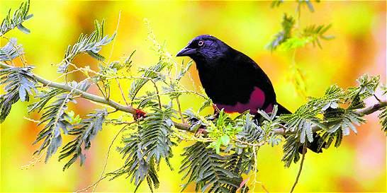 Un libro para conocer las aves del Alto San Miguel