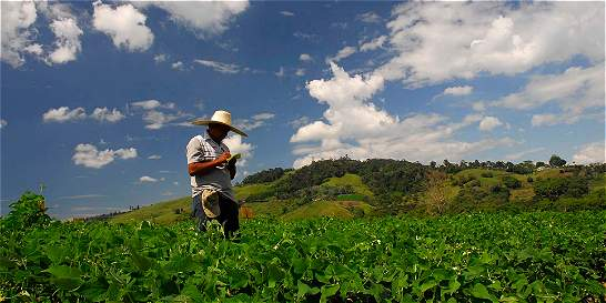 Jóvenes tienen 'mucho campo' para potenciar la agricultura