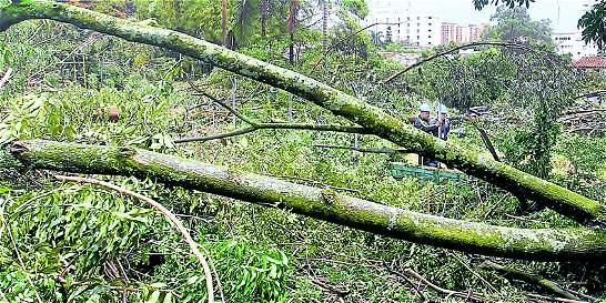 Antioquia, segundo departamento del país donde más talan árboles