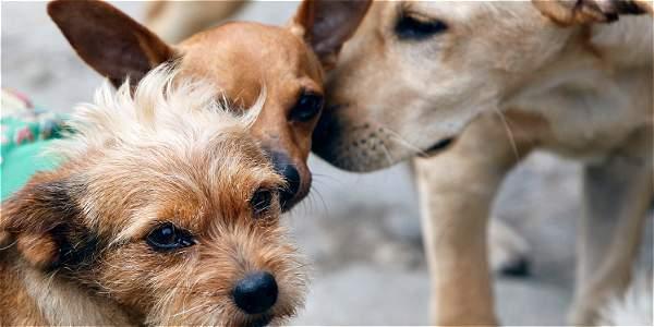 Las penas contempladas por la nueva reglamentación incluyen multas entre 5 y 60 salarios mínimos legales vigentes, además de penas de uno a tres años de cárcel a los maltratadores de animales.