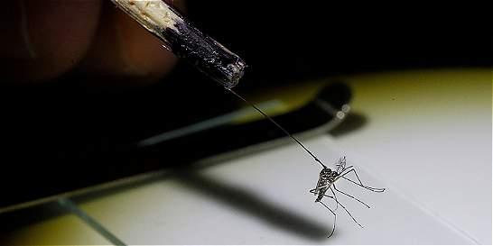 Financian programa contra el dengue